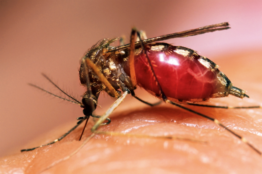 В Новой Каледонии зарегистрирована первая за год смерть от лихорадки Денге