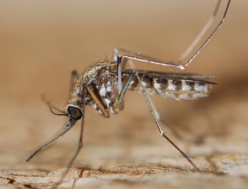 Благодаря лягушкам сделан важный шаг в изучении малярии