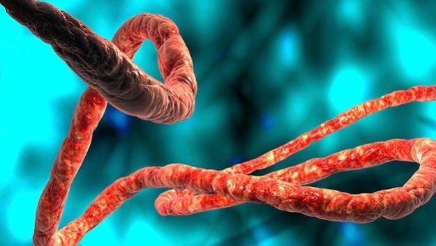 Малярия… помогает выжить при инфекции Эбола