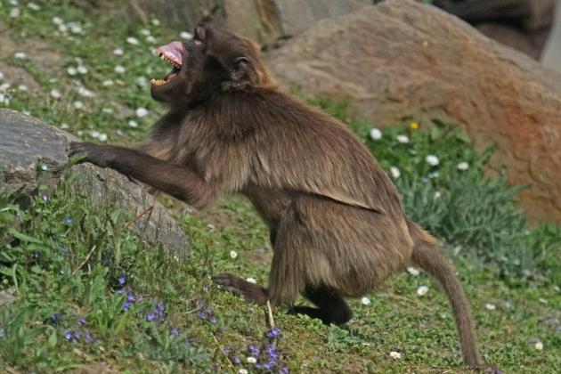 Ученые впервые заразили вирусом Зика беременных обезьян