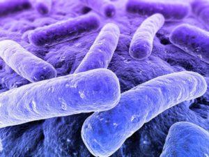 Ученые расшифровывают механизм бактериальных инфекций