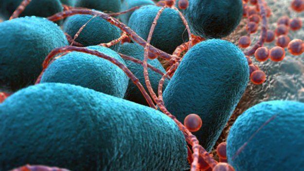 Полимеры победят бактерий, устойчивых к антибиотикам