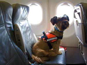 Как подготовить собаку к перелету?