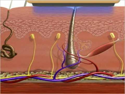 Эпиляция зоны бикини повышает риск особо заразных вирусных инфекций кожи