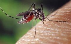 Специалисты ВОЗ считают малярию острой проблемой современного человечества