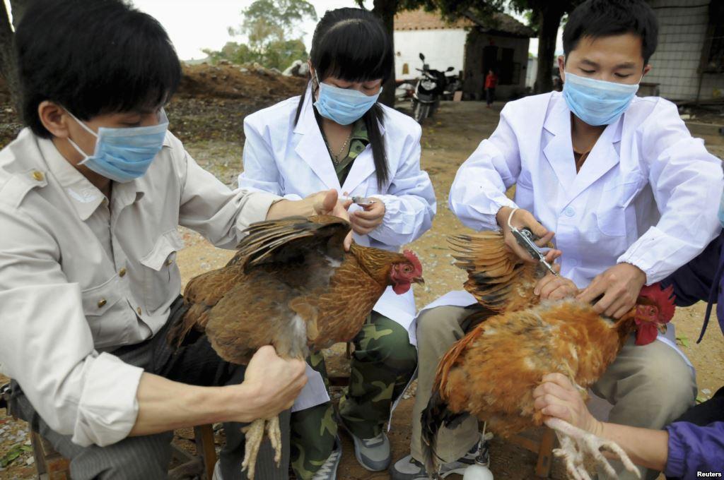 В Южной Корее свирепствует птичий грипп