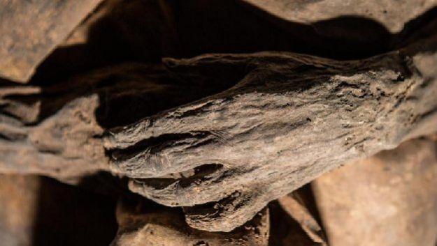 Ученые открыли новые страницы в истории оспы
