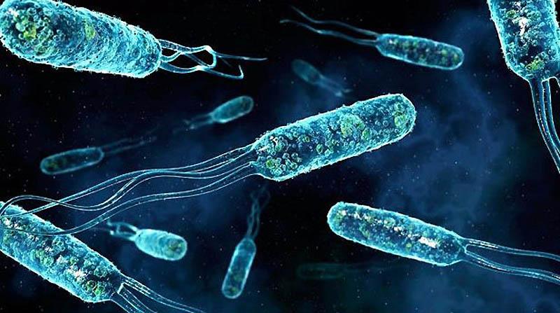 Новый гель справится с бактериями, устойчивыми к антибиотикам