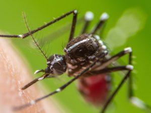 Ученые создали принципиально новую вакцину от вируса Зика