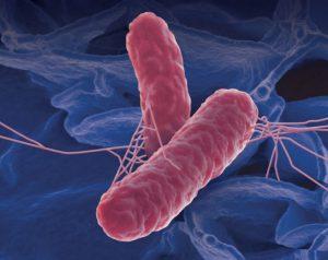 ВИЧ создал новую форму сальмонеллы