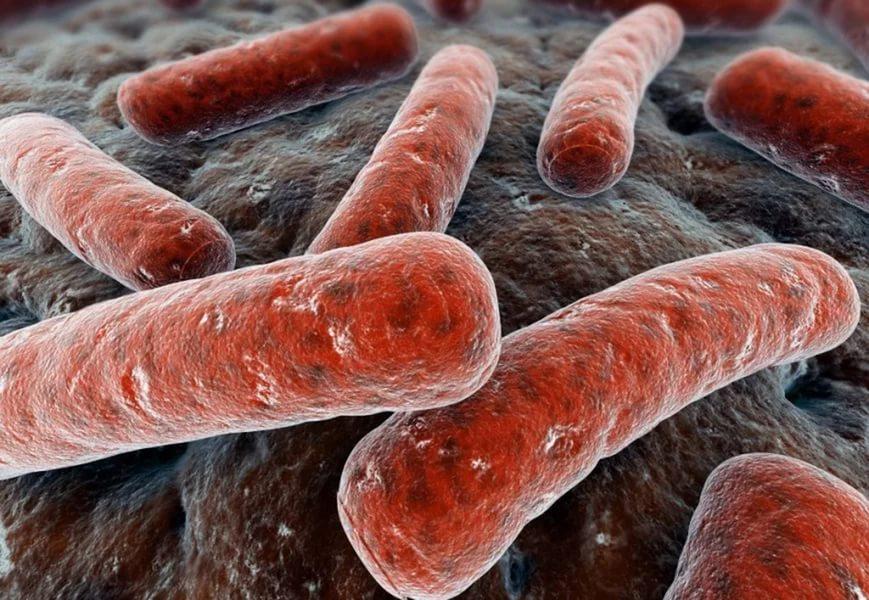 Бактерии, жувущие в почве, подсказали, как бороться с туберкулезом