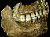 Предки современных людей принимали аналог аспирина и антибиотики