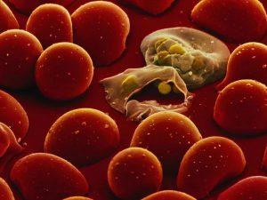 Ученые выяснили, в чем секрет устойчивости к лечению малярии