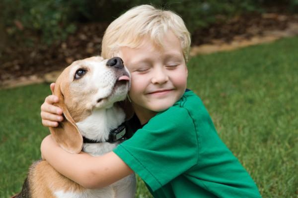 Владельцы собак рискуют заразиться экзотической болезнью