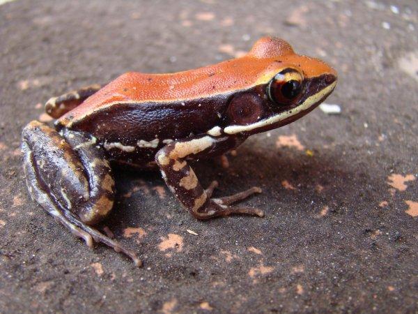 Ученые: Слизь лягушек поможет человечеству вылечить грипп