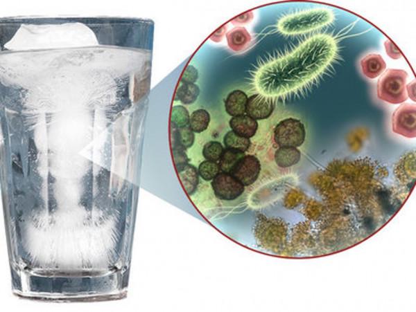 Учёные: Герпес могут провоцировать вирусы в воде