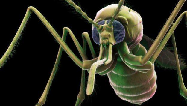 Комары переносят загадочную и опасную инфекцию