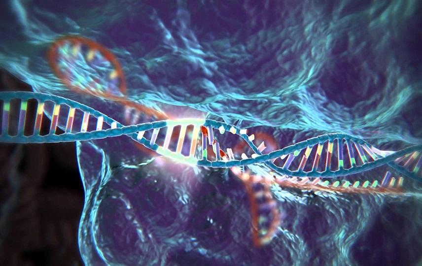 Ученые заявили об опасных побочных эффектах технологии редактирования генов