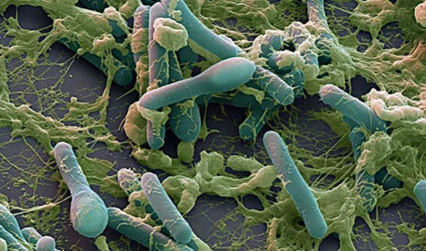 Ученые создали антидот против токсина ботулизма