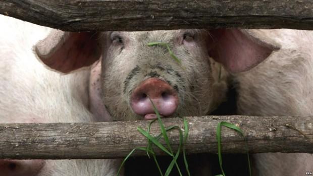 Свиной грипп убил в 10 раз больше людей, чем изначально прогнозировали врачи