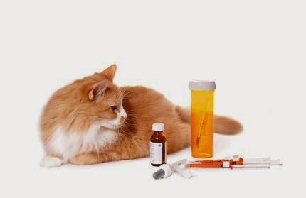 Золотистый стафилококк передается хозяевам от домашних животных