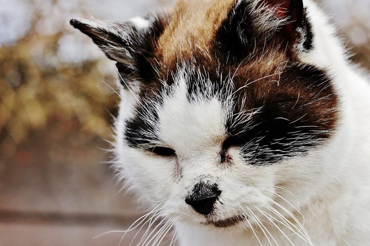 В Нью-Йорке кошка заразила пациента птичьим гриппом
