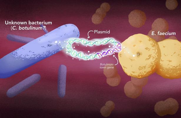 Новый тип токсина ботулизма нашли у почти безвредной бактерии