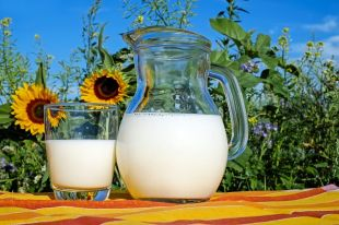 В пробе молока обнаружен антибиотик