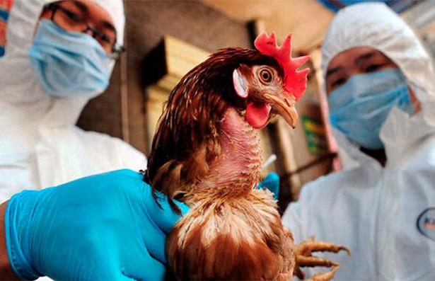 Роспотребнадзор сообщает о вспышке птичьего гриппа во Вьетнаме