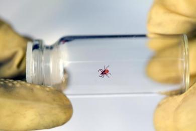 Если вас укусил клещ, где проверить его на наличие инфекций?