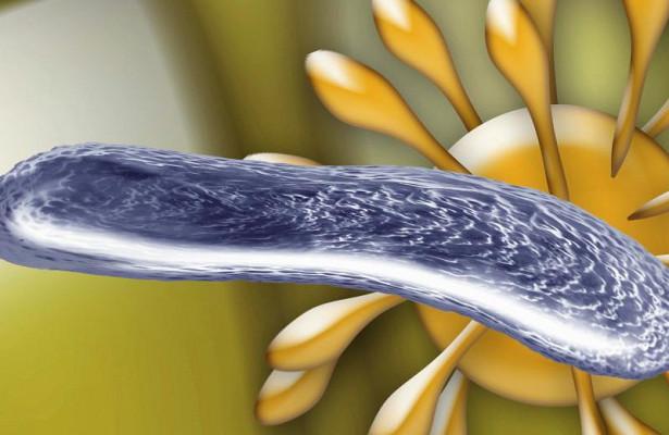 Каждую третью инфекцию у жертв цирроза вызывают непобедимые бактерии