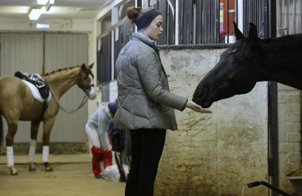 В Павловске ввели карантин из-за инфекционной анемии лошадей