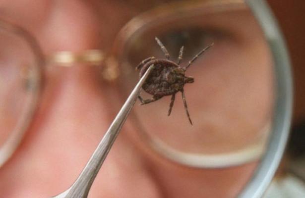 Случай заражения клещевым энцефалитом зарегистрирован в Нижегородской области