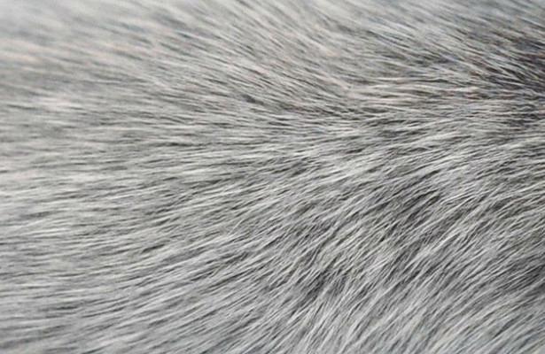 Седые волосы уходят корнями в иммунную систему