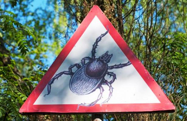 В воронежских лесах активизировались клещи