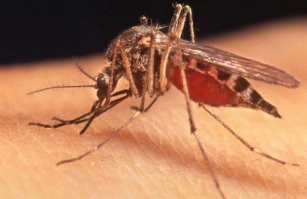 Не нужно бояться: врач открыл правду об укусах комаров