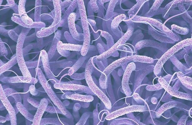 Ученые впервые увидели, как бактерии получают устойчивость к антибиотикам
