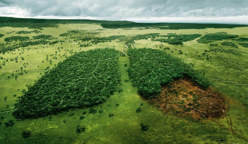 Экологическая обстановка растительного мира