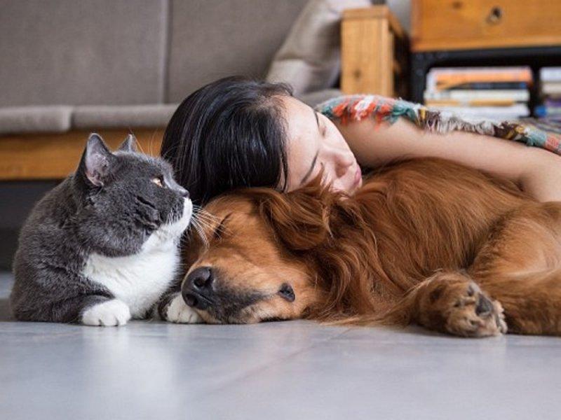Кошки и собаки могут заражать неизлечимыми бактериями