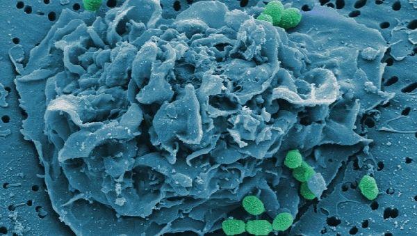 Лактобактерии защитят от гриппа
