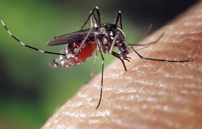 Во Флориде зафиксирован новый случай межвидового перехода вируса