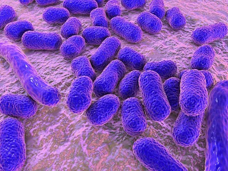 Супербактерии все-таки можно лечить антибиотиками