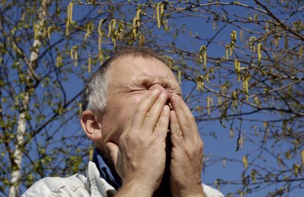 Аллергия на березу: как справиться с поллинозом?