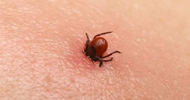 Чем опасен укус клеща