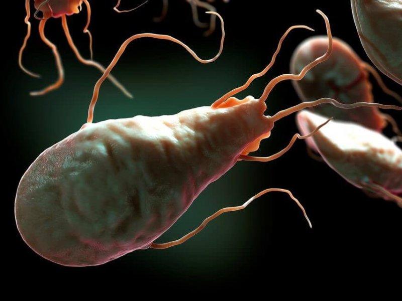 Специалисты рассказали, как в организм проникают паразиты