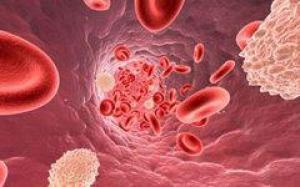 Работа иммунной системы определяет, какими будут роды