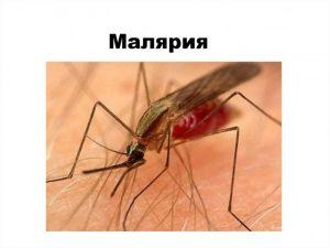 Специалисты не могут найти современных методов в борьбе с малярией