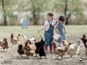 Тесный контакт с животными имеет решающее значение для иммунитета