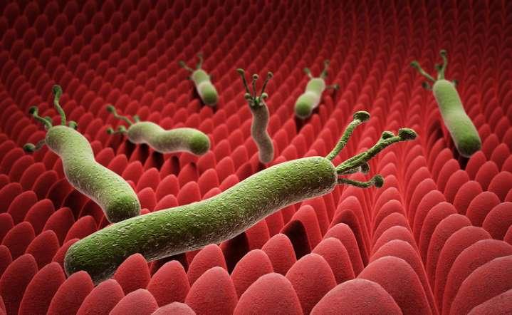 Что нужно знать про мононуклеоз