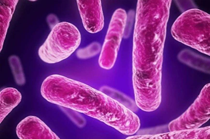 Виды кишечных инфекций